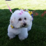2015-Annual-Woofstock-Prescott-Valley