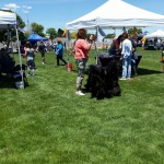 2015-Woofstock-Prescott-Valley-Real-Dogs-Dont-Whisper