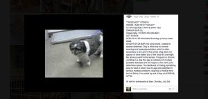 Farley Shih Tzu looking for answers