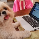 Mini Me writes about tick fever in dogs