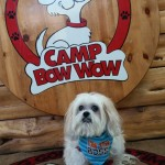 Mr MaGoo guest speaker at Camp Bow Wow Peoria AZ