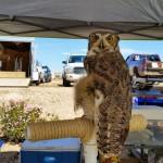 Owl-Pet-Expo-2015-Glendale-AZ