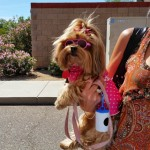 Yorkie Terrier showing fashion forward at Pet Expo 2015