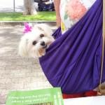 Adorable Maltese enjoying Dogtoberfest 2014