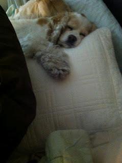Buffy asleep