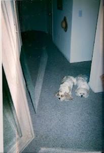 MaGoo and Buffy