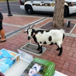 Goat at Glendale's Dog Days of Summer fundraising event and future fan of Real Dogs Don't Whisper