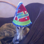 Real Dogs Birthday Club photos