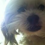 Mr MaGoo closeup