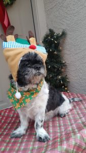 Open letter to parents in Phoenix AZ that owned Farley Shih Tzu