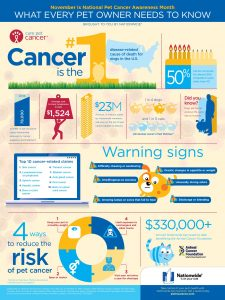 Pet cancer awareness begins with education and discussions with your vet.