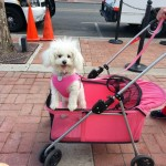 Adorable dog all in pink at Dog Days of Summer