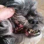 National Dental Pet Health Month is in Febraury