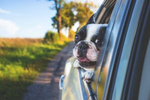 A new pet? Read this tips before bringing home a new pet