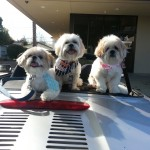 Mr MaGoo and gang is ready for fun in the sun