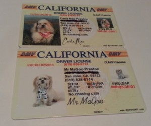 Mr MaGoo's pet license