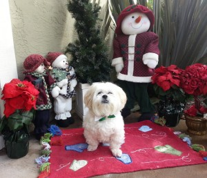 Real Dogs Don't Whisper Mr MaGoo Christmas 2012