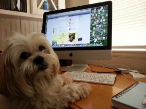 Mr MaGoo at the computer