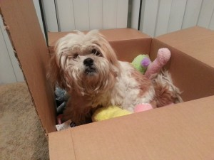 Carla Mae in a bed of stuff toys