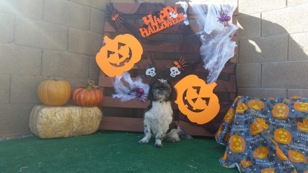 Keep Your Dog Safe This Halloween – Tips