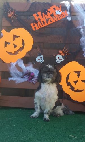 #cancerfightingninja Trick or Treat Halloween with your dog