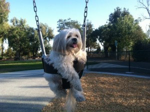 Mr MaGoo enjoys swinging the day away