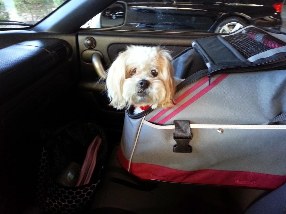 Pet car seats ensure pet safety during travel
