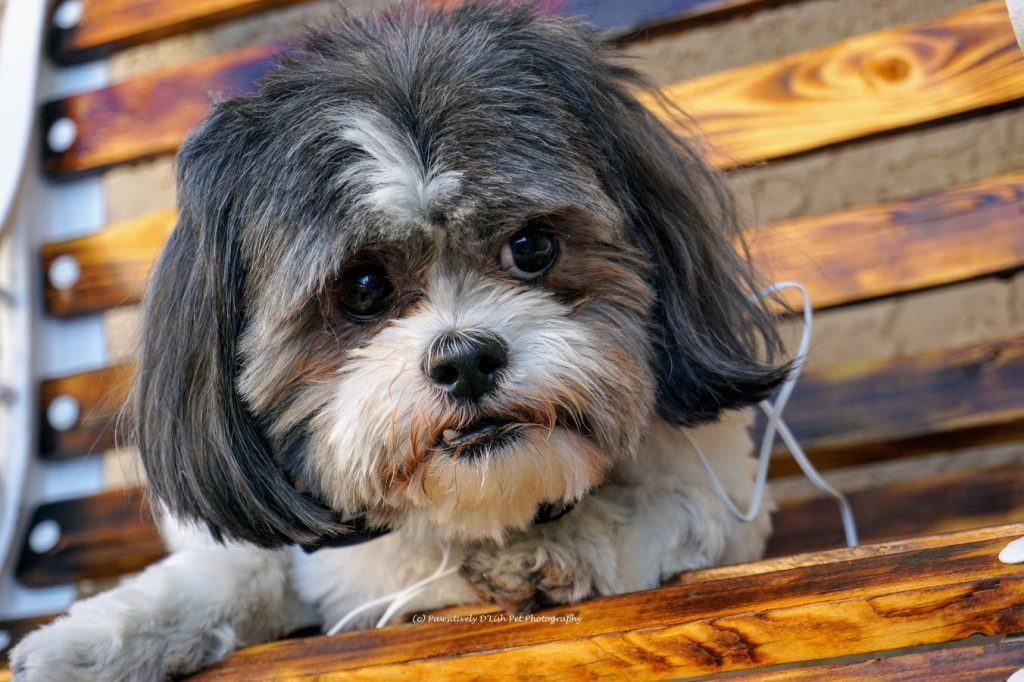 Selecting The Best Food For Your Pet