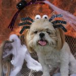 Keep your dog safe this Halloween with these safety tips.