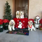 Happy holidays from Real Dogs Don't Whisper