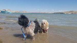 open-letter-to-parents-in-az-farley-swims-at-lone-rock-beach-ut