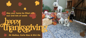 Happy Thanksgiving from Real Dogs Don't Whisper