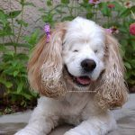 Shop with Amazon and give back to dogs with special needs.