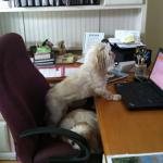 Mr MaGoo writing his blog