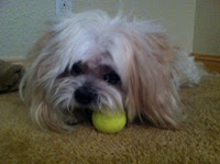 Mr Magoo with tennis ball