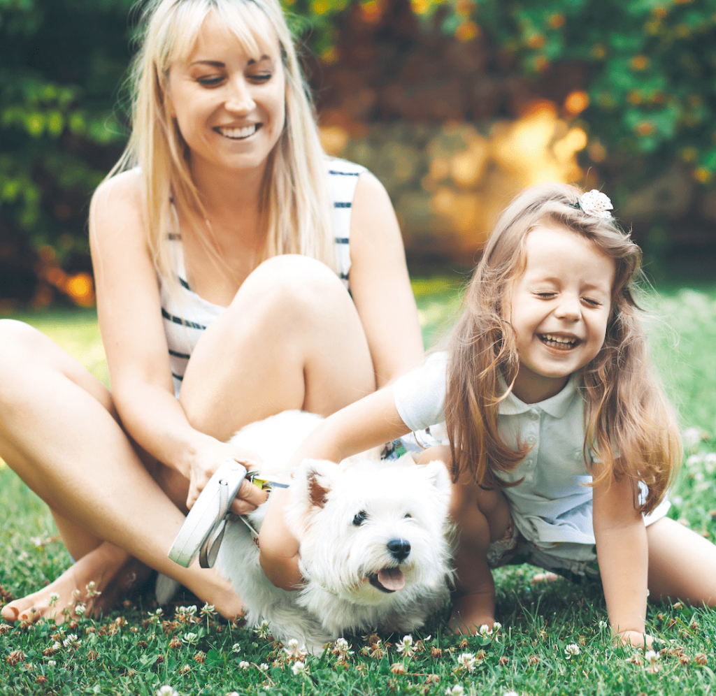 Joint Health Tips For Pets