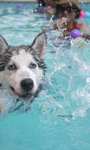 Hydrotherapy for dogs has amazing benefits