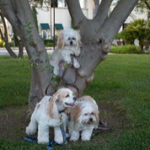 Real Dogs family
