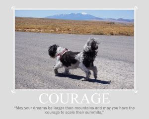 Courage is what Farley #cancerfightingninja Shih Tzu warrior showed and taught everyone.