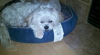 Mr MaGoo resting