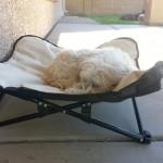 Mr MaGoo enjoys nap time