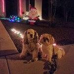 Santa Claus is watching over Fancy and Mini Me