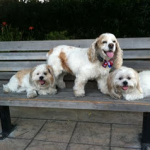 Real Dogs family on a bench