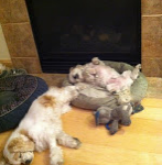 Mr MaGoo and sisters asleep