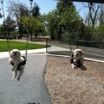 Mr Magoo and Carla Mae in swings