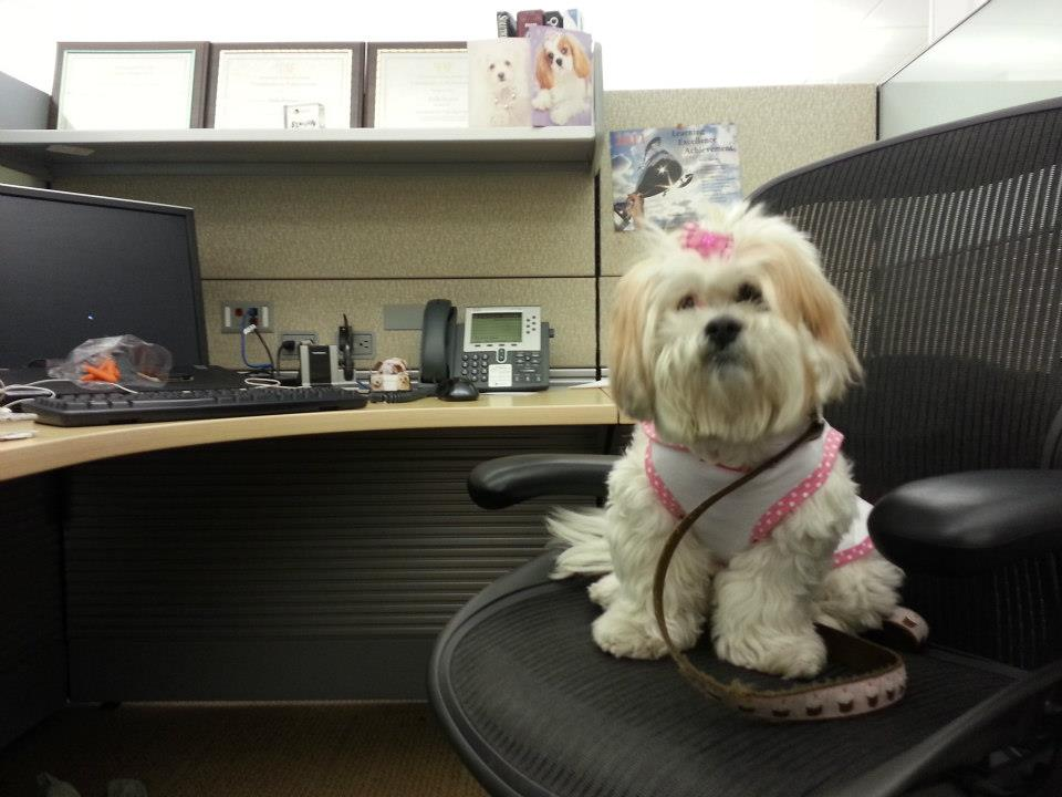 Pets In The Workplace Benefits Of Having Pets At The Office